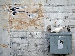Portland - Graffiti Wall