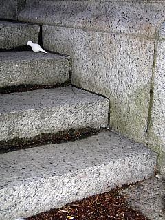 Portland - Stone Stairs
