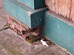 Portland - Turquoise Corner