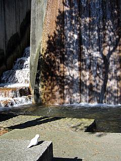 Portland - Water Tree Shadow