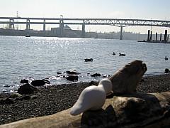 Portland - Waterfront