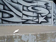 Minneapolis - Black/White Graffiti