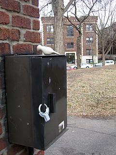 Minneapolis - Park Black Box