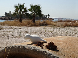 Greece_beachpalms