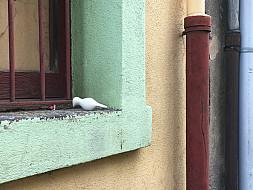 Olot,Spain_windowsill
