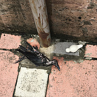 Mumbai dead bird