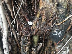 Mumbai # tree