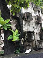 Mumbai Windows